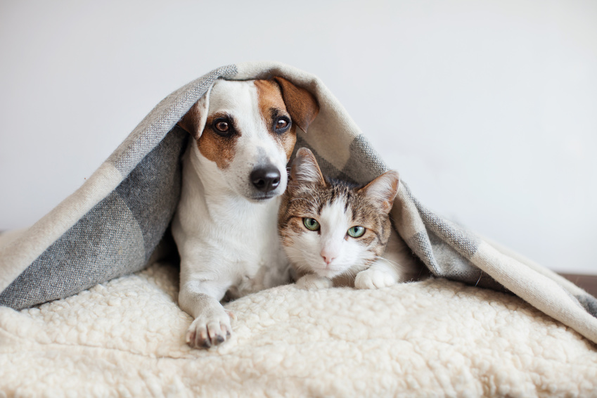 pet cover solutions