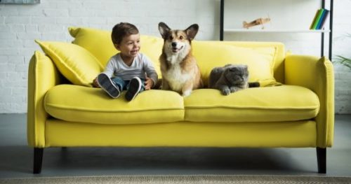 How To Choose Upholstery Fabric for Your Sofa